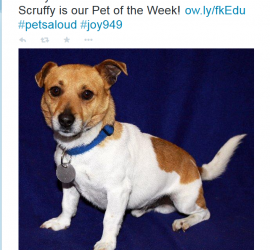 Scruffy the 5 year old Jack Russell Terrier X was the Lost Dogs' Home dog of the week in November 2012.